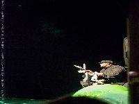 zec kornjaca  i kompanija